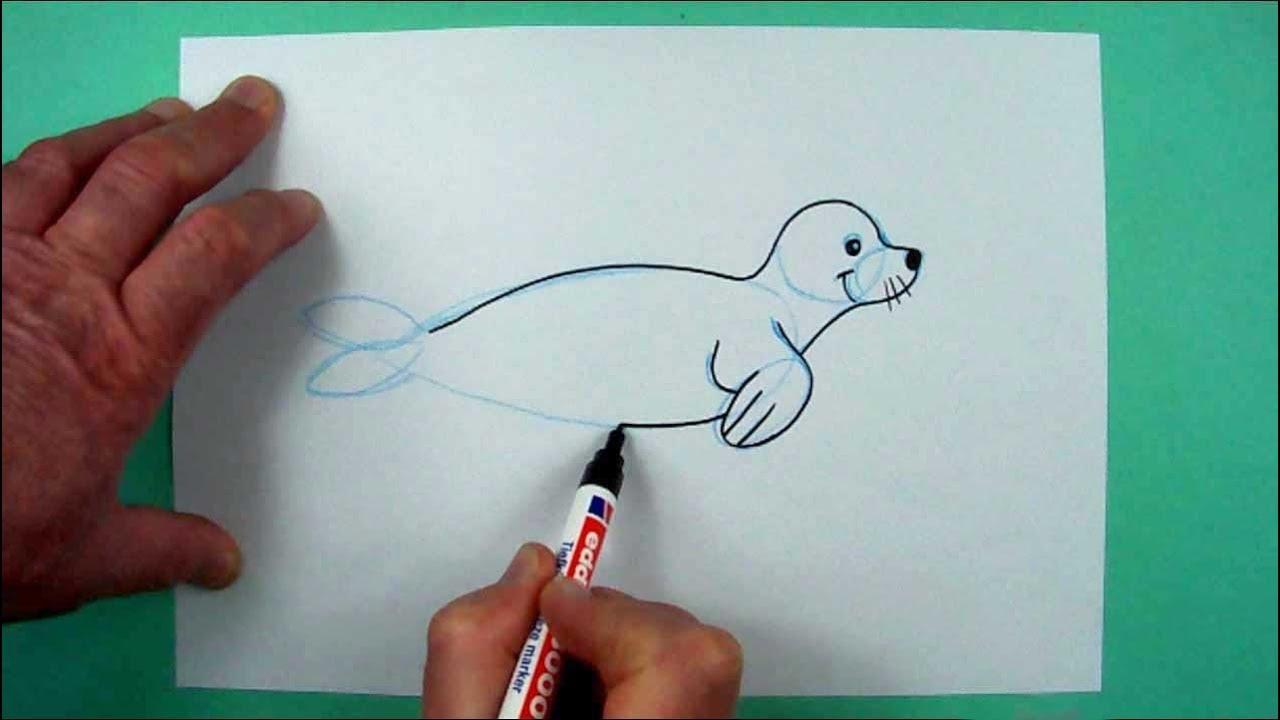 Robbe Zeichnen Mit Genauer Anleitung Zeichnen Für Kinder Und