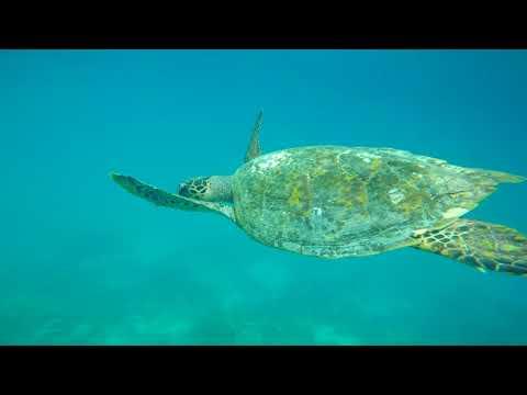 Snorkeling gear rental - snorkeling in the Maldives