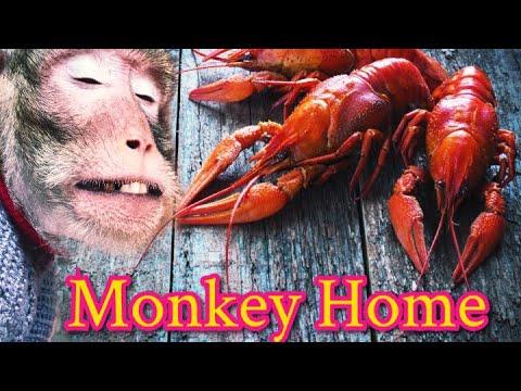 Домашние макаки:букет раков