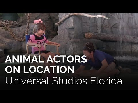 Animal Actors On Location at Universal Studios Florida at Universal Orlando Resort