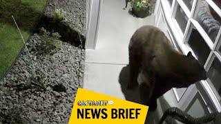 Bear euthanized