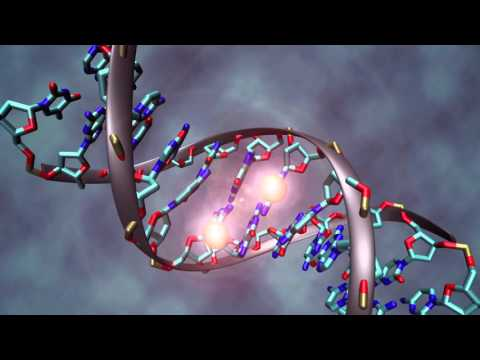 How and why life evolved from single cell organisms to multi cell organisms