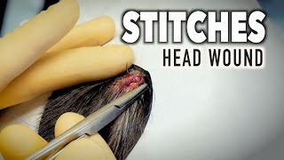 STITCHES (Head Wound) | Dr. Paul