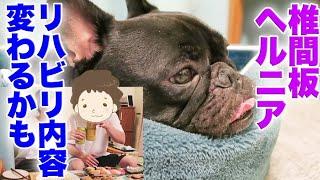 犬椎間板ヘルニア 今後の治療についてはりの先生にお話を伺いました