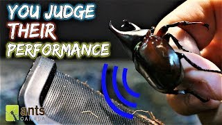 YOU ARE THE JUDGE | Singing Beetle Competition