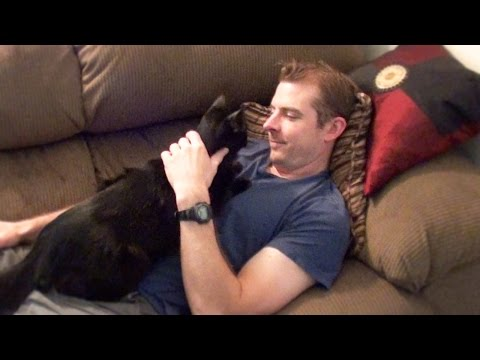 Cat Really Loves His Dad!