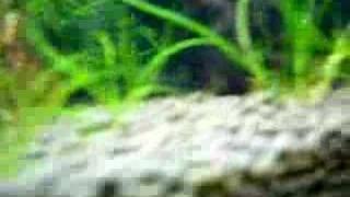 Nano 5 Gallon Freshwater Plant Tank Baby Fish