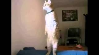 Веселые бои нарезка приколы котики    собачки    и т д 2