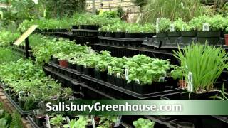 Tips for Growing Fresh Herbs
