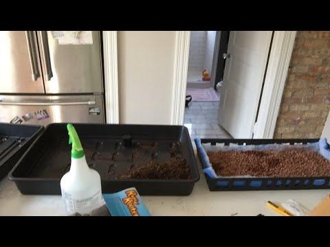 DIY Small Bio Filter For Home Aquaponics System