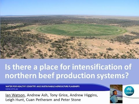 Is there a place for intensification of northern beef production systems?
