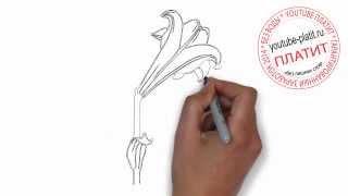 Нарисованные цветы  Как нарисовать ландыш карандашом(Как нарисовать дружную семью поэтапно карандашом за короткий промежуток времени. Видео рассказывает о..., 2014-07-02T05:48:36.000Z)