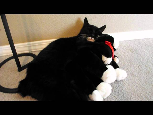 Cat hugging a stuffed animal cat