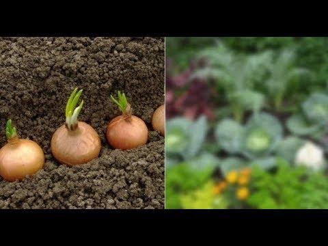 Эти овощи жить друг без друга не могут, только рядом! Вот что принесет такое соседство