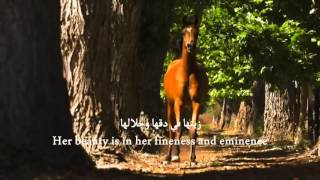 Daughters of the wind [English subtitles] - Mishary Al-Afasy (Halal Nasheed. No Music)
