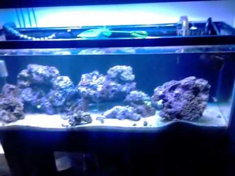 Removing the Damsel Fish