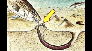 Морская рыбалка на червя!  Как сохранить морских червей? Как найти морских червей?