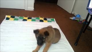 Dams And Darlings Dog Rescue - Orphan Annie - Puppy Training
