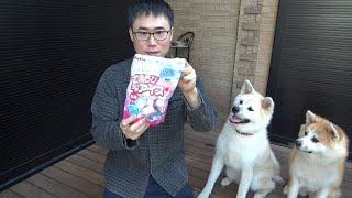秋田犬に犬用アイスあげてみた!