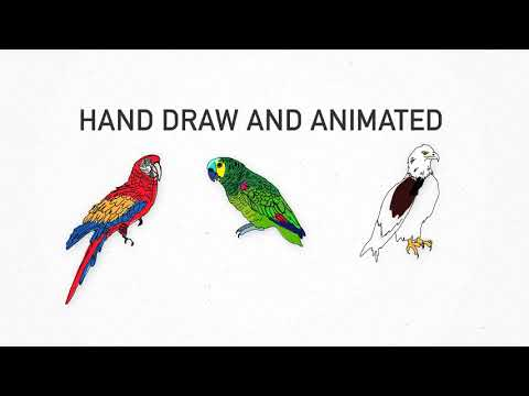 Hand Drawn Animated Birds - After Effects template from Videohive
