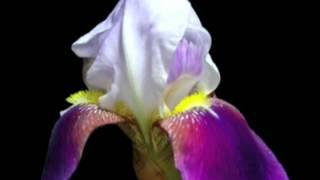 Magic Flower, 2002, spring equinox / equinoccio de primavera