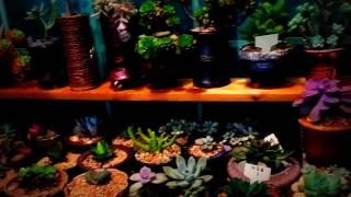 [ 다육식물]  우리집 다육이 구경 하세요.
