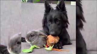 Baby Dogs   Cute and Funny Dog Videos  Animals  target tag 2020
