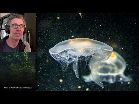 Isolation Tutorial: Neuroradiology #3 With Frank Gaillard