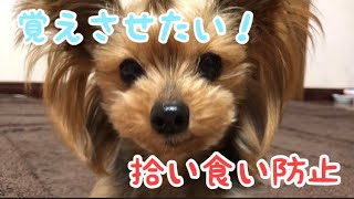 ちょんまげ犬ヨーキー https://www.youtube.com/channel/UCxHT55_krlDVG...