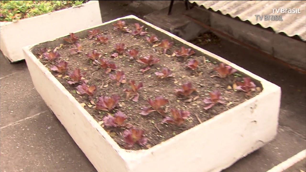 Horta na Galeria do Rock é ferramenta de ensino para vida sustentável