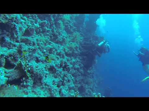 Diving on the Ras Mohamed National Park. Sharm El Sheikh, August 2014