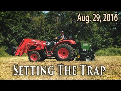 Food Plots for Big Bucks | Midwest Whitetail