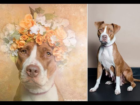Photographer Helps Pit Bulls Get Adopted