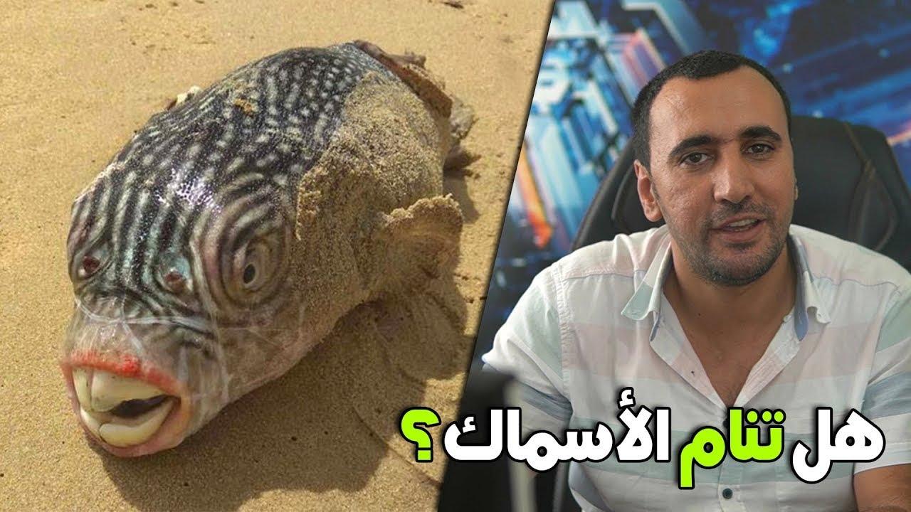هل الأسماك تنام وكيفية النوم ان وجدت ؟ التفاصيل كاملة #البهاريز