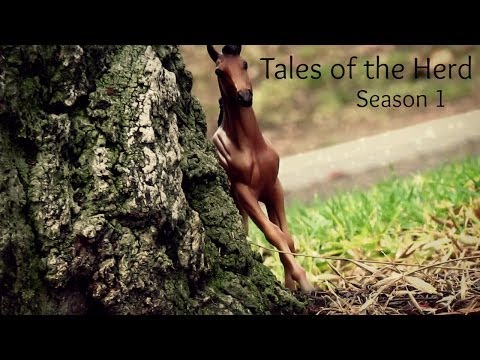 Tales of the Herd (Breyer Horse Series) S1 E1