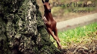 Tales of the Herd Breyer Horse Series S1 E1 A Rising Threat