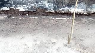 Кошмар! Нападение гадюки!! Одесская обл. порт южный.(Гадюка кидается как собака...., 2016-06-03T08:26:57.000Z)