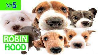 ПРИКОЛЫ 2017 с животными. Смешные Коты, Собаки, Попугаи // Funny Dogs Cats Compilation. Январь №5