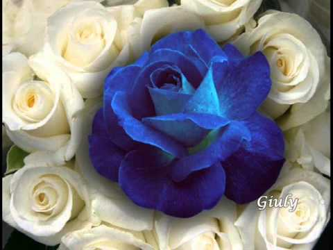 Una rosa blu per te che sei speciale youtube for Foto di rose bellissime
