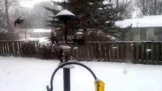 European Starling Invasion Of Backyard Birdfeeder