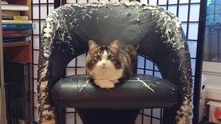 ПРИКОЛЫ С ЖИВОТНЫМИ Смешные Животные Собаки Смешные Коты Приколы с котами Забавные Животные 74