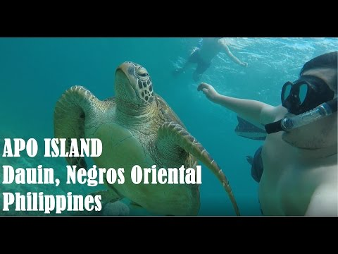 Apo Island Dauin Negros Oriental Philippines (Scenery and Sea Turtles)
