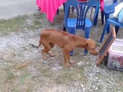 Dangdut lah anjing dangdut!!!Huhuhu