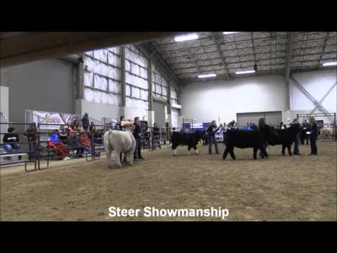 MJC Winter Cattle Classic: Steer Showmanship
