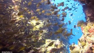 видео снятое на Canon PowerShot G12(качество видео снятое под водой на Canon PowerShot G12., 2013-02-15T22:26:09.000Z)
