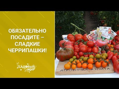 Вопрос: Какие сорта помидоров не вызывают аллергию?