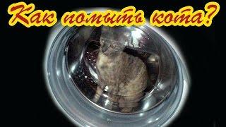 Вы знаете, как помыть кота? Или кошку(Как помыть кота? Ерунда какая! Намочить, намылить и ополоснуть. А вы попробуйте проделать все эти манипуляци..., 2014-11-19T19:23:52.000Z)
