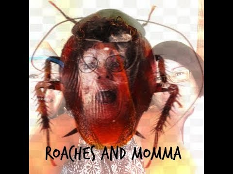 Florida Bugs, Roaches in Florida and Calling Momma