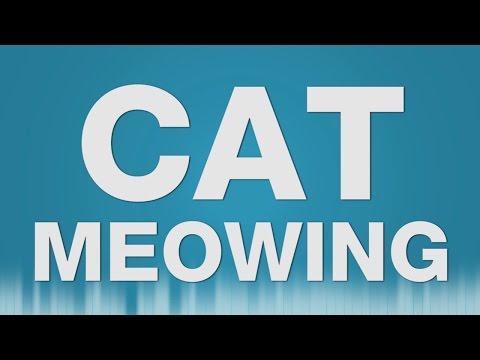 Cat Meow SOUND EFFECT - Katze Miau SOUNDS