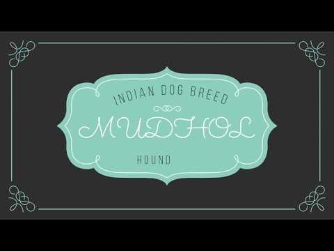 mudhol Dog || HOUND || Dog Breed || Indian Dog breed